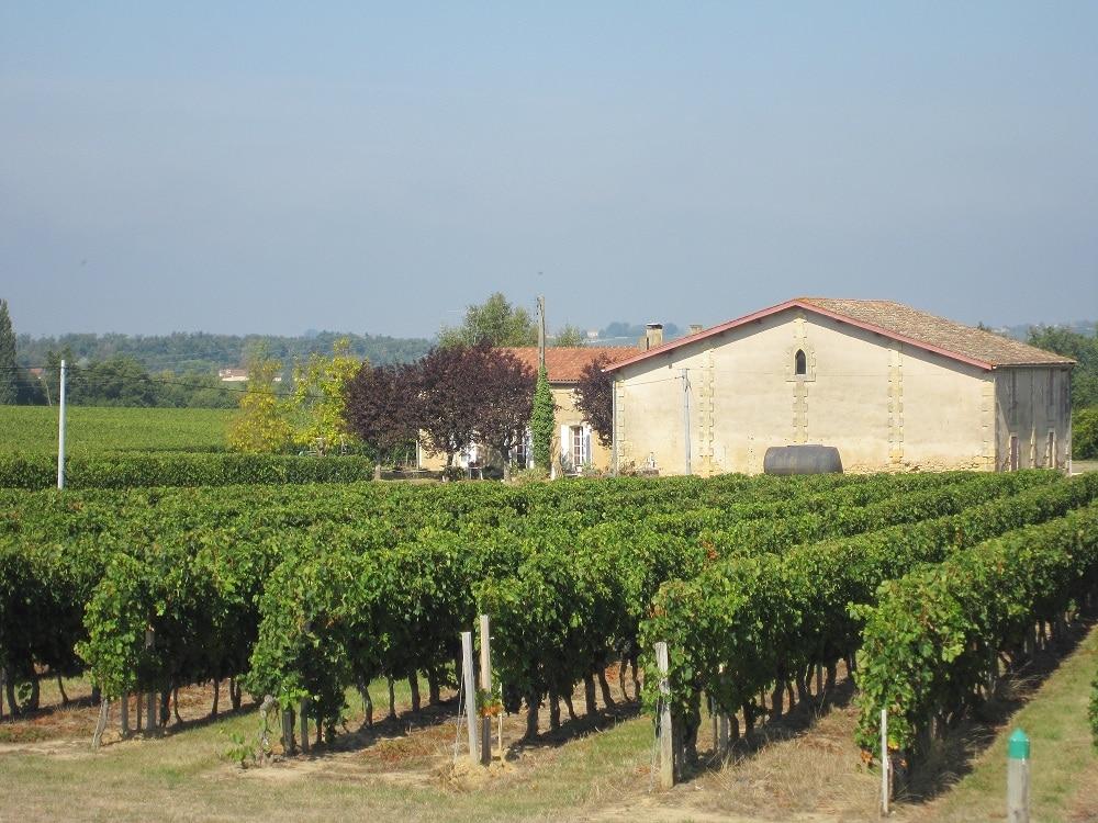 bordeaux vineyards