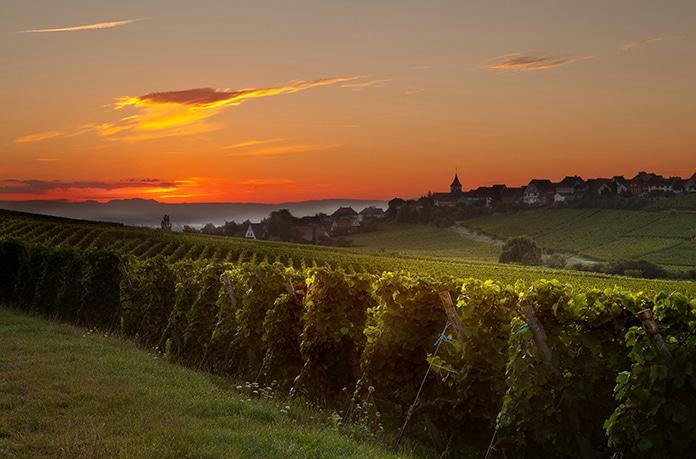 Bordeaux Vineyard Market; Part One – Market Review