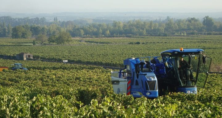 Cognac Vineyards – The Harvest Starts Late