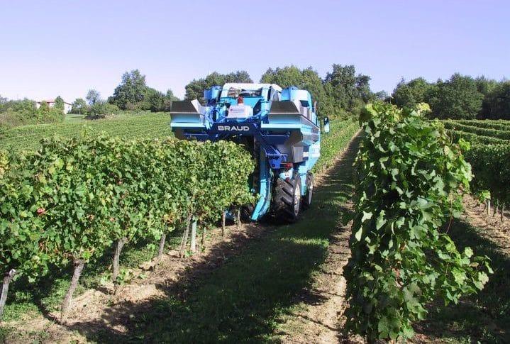 The 2014 Bordeaux Harvest is underway