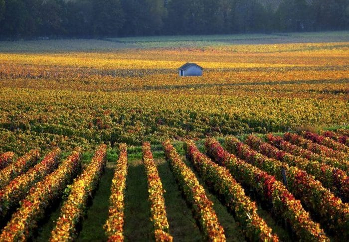 Vineyards for sale in Bordeaux