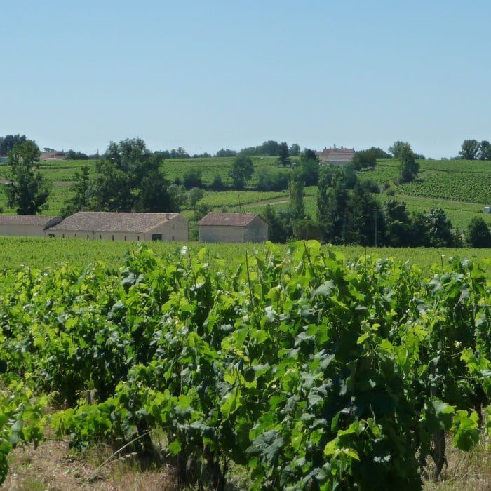 Australian Vineyard Investor chooses Bordeaux