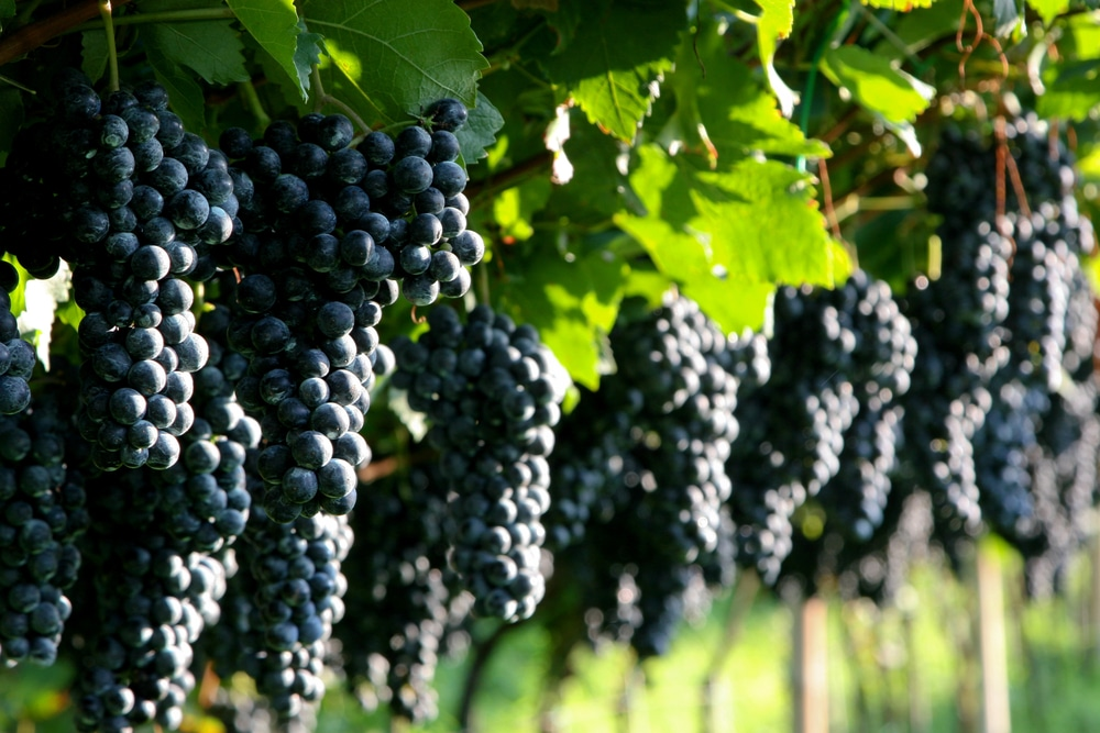 Bordeaux Vineyards – State of the Market Summer 2018