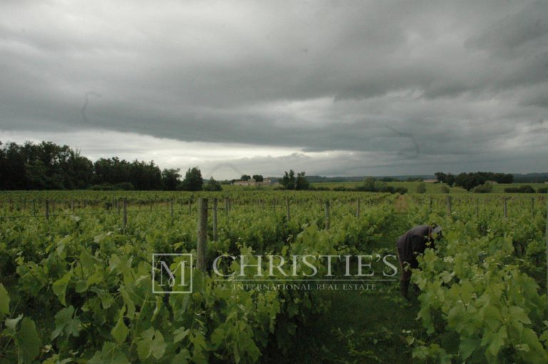 One of the largest organic vineyards on the right bank of Bordeaux