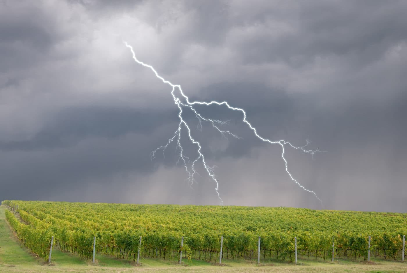 Hail storms in Bordeaux vineyards – reducing the risk with technology